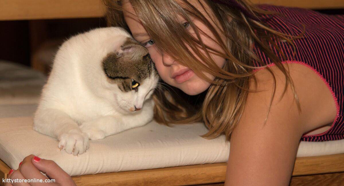 Cat in puberty